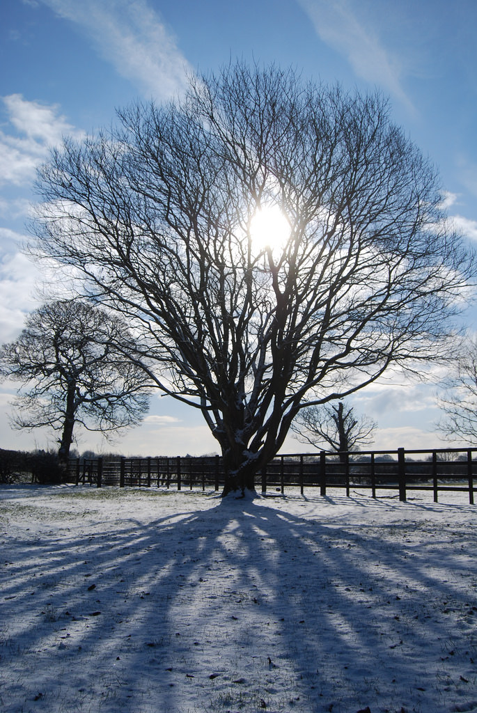 A simple combination of snow, a tree and direct sunlight result in this symmetrical image, taken at home.